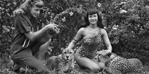 bunny-yeager-bettypage_cheetah_zps6bf7eb16 (1)