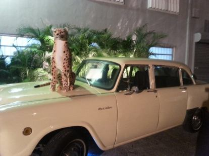 cheeta on car