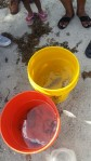 Buckets full of our living treasures.